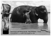 Aesop elephant ad